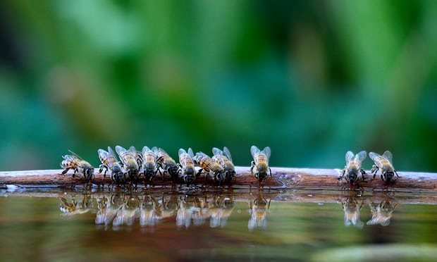 insectos-abejas-rdn