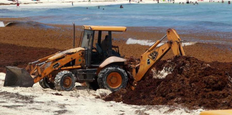 sargazo biofertilizante evitaria contaminacion de playas