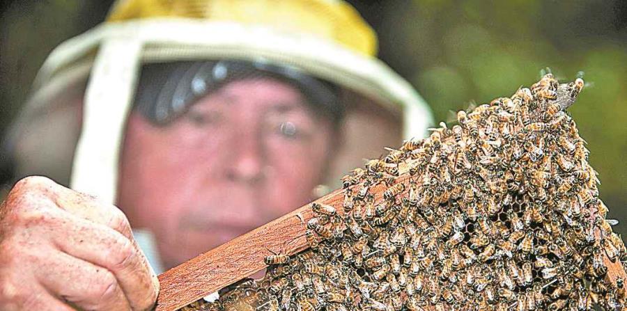 colmenas abejas apicultores