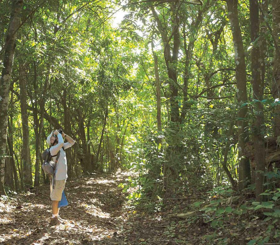 turista bosque