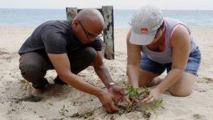 Siembra de árboles en Ocean Park PLN
