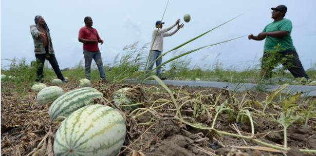 agricultores agroempresarios