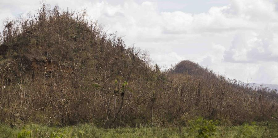 bosques de la isla