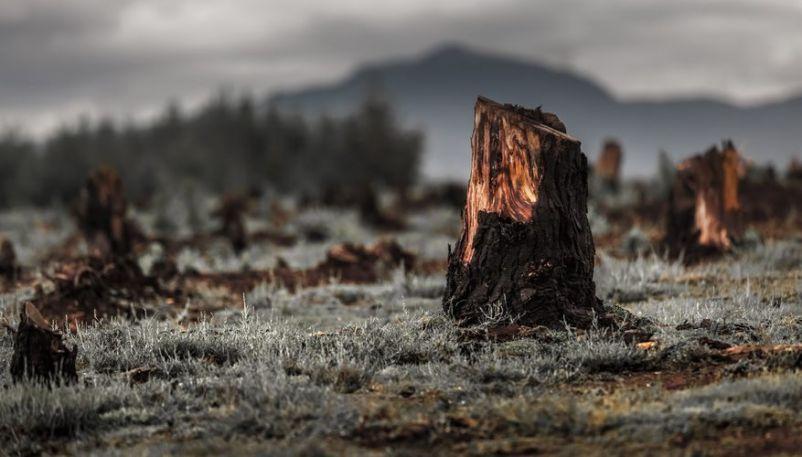 Resultado de imagen de bosques talados