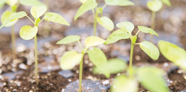 cambio climático producción agrícola
