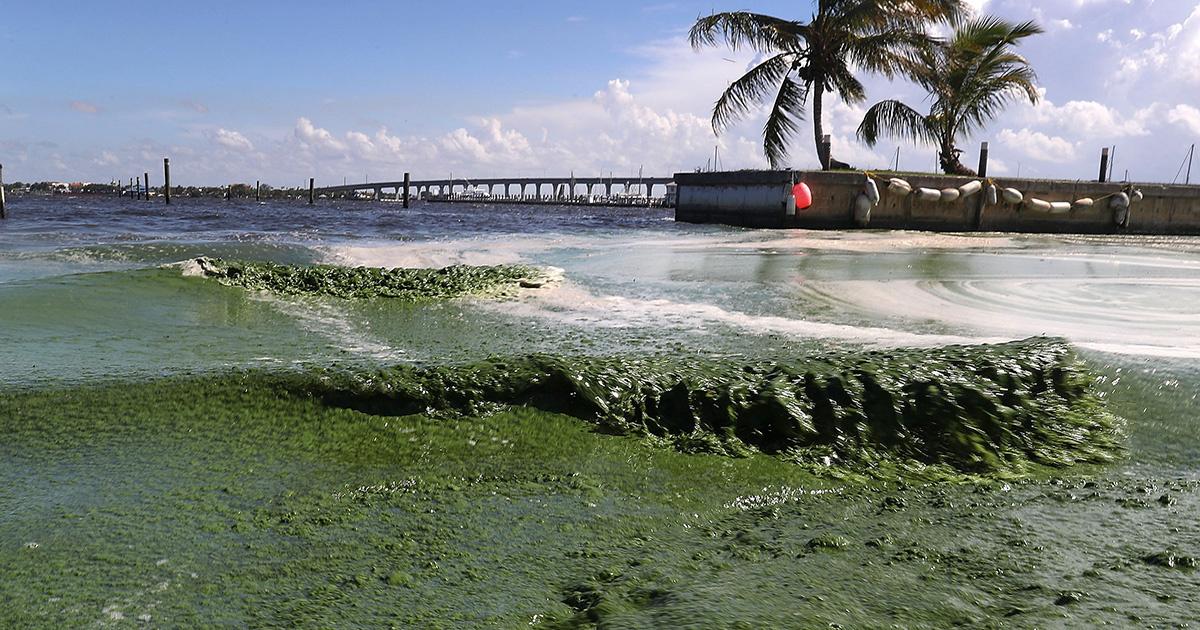 Florida Algae Crisis