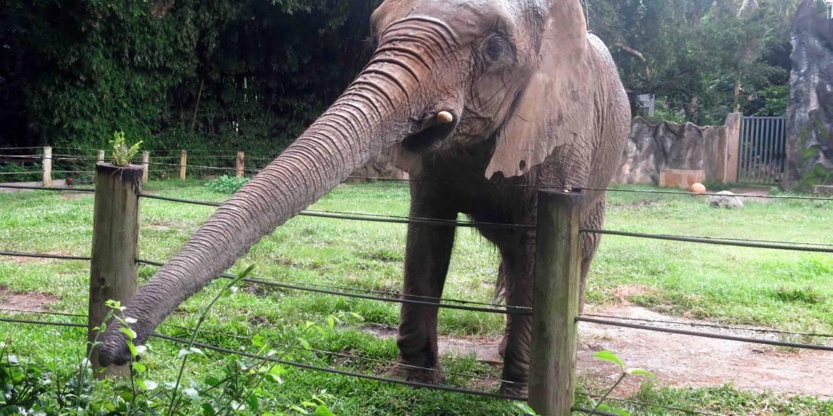 elefante Mundi zoológico de Mayagüez