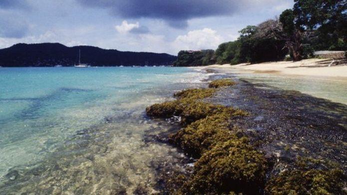 islas de algas playas caribe