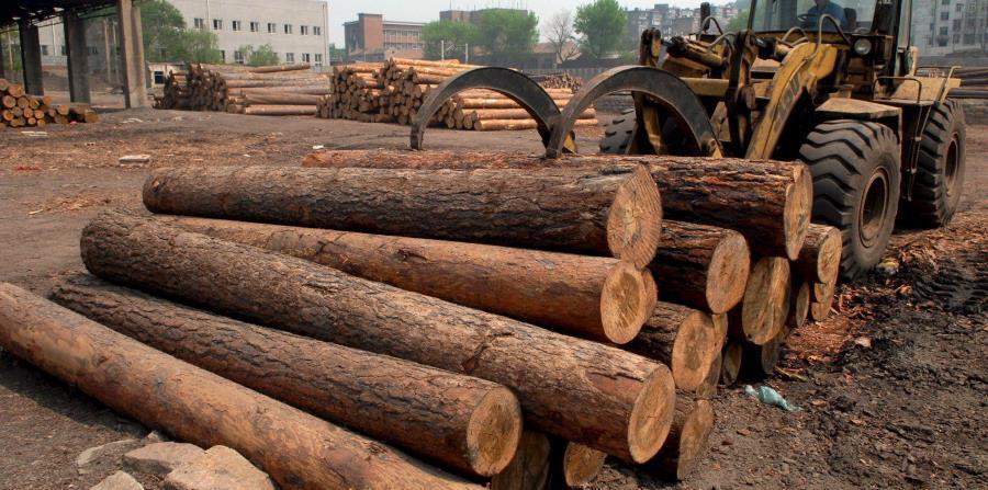 manejo de troncos