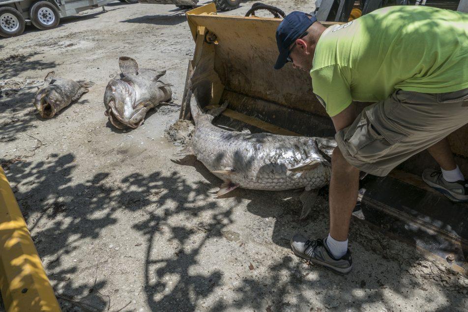 miles de peces muertos en Florida