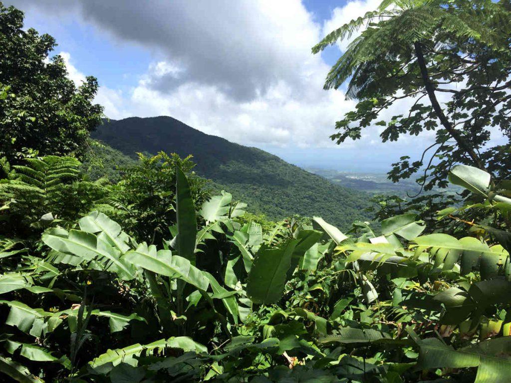 Bosque-Nacional El Yunque