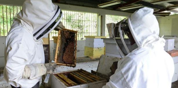 apicultores en Fajardo