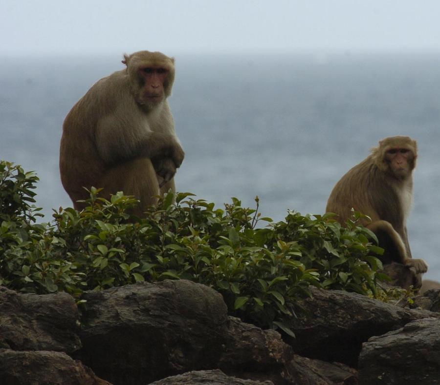 Centro Primates de Puerto Rico y el Caribe