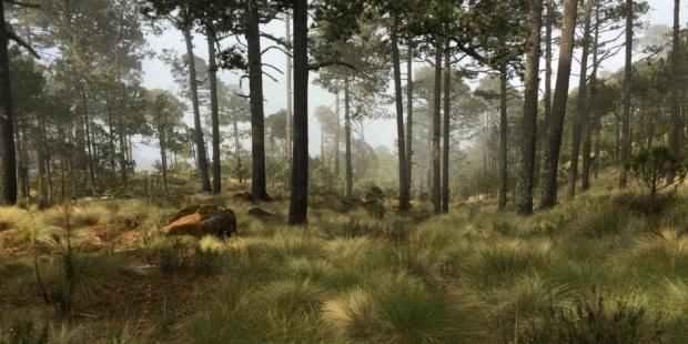 bosque en Perote