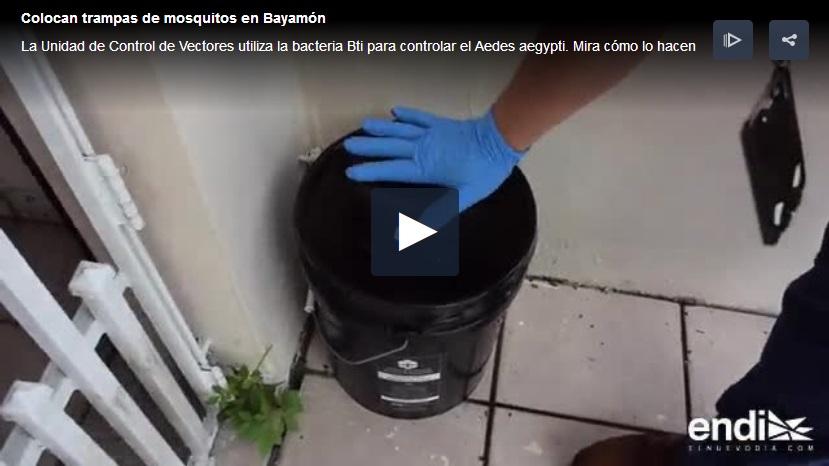 guerra al mosquito Aedes aegypti