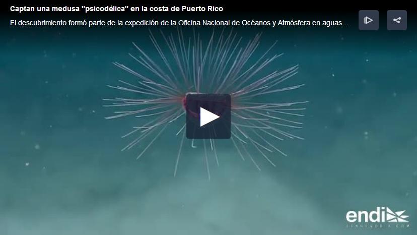 medusa psicodelica