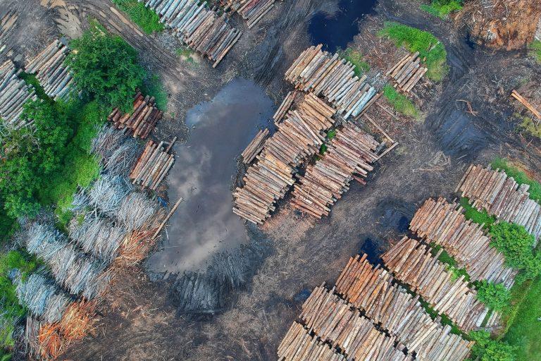 China Rainforest deforestation