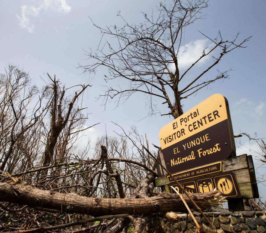 bosque El yunque tras el paso del huracan Maria