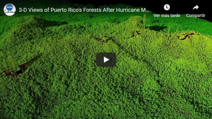 forest after hurricane Maria