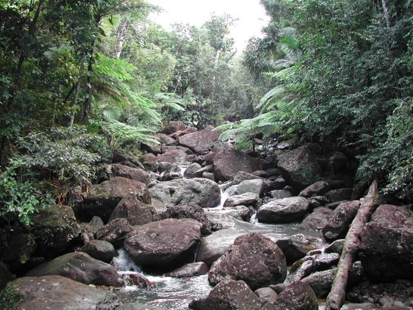 stream Quebrada Sonadora in the Luquillo Mountains