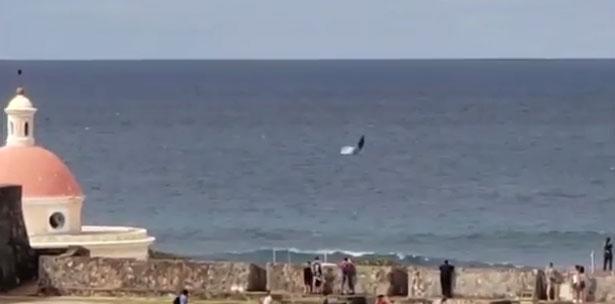 Avistamiento de ballenas jorobadas frente a El Morro en Viejo San Juan
