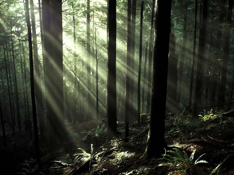 arboles-bosques-lenguaje