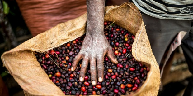 cafe-etiopia-Jardin-Botanico-de-Kew
