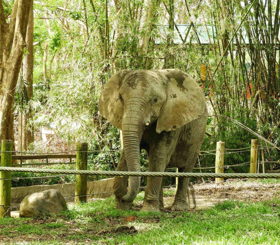 el traslado de elefante Mundi