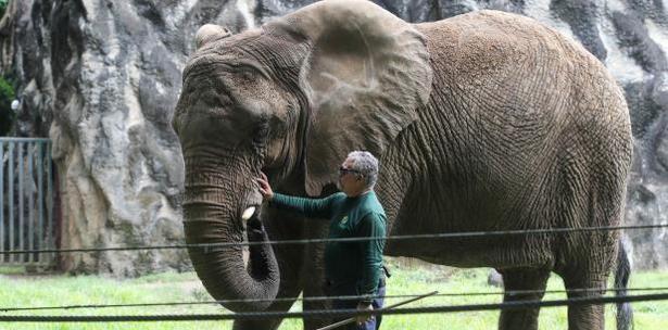 elefante Mundi