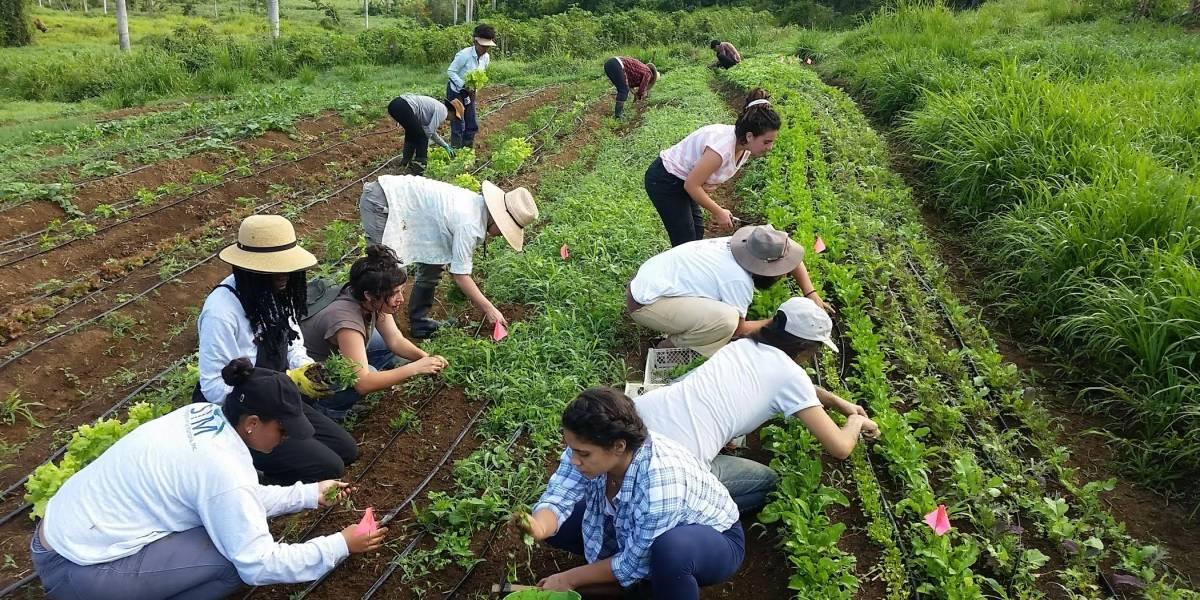 proyecto agroecologico El Josco Bravo