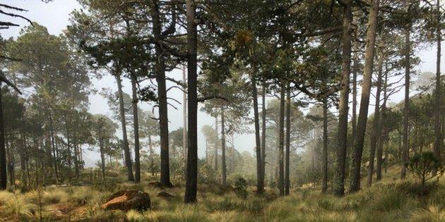 Bosque Árboles