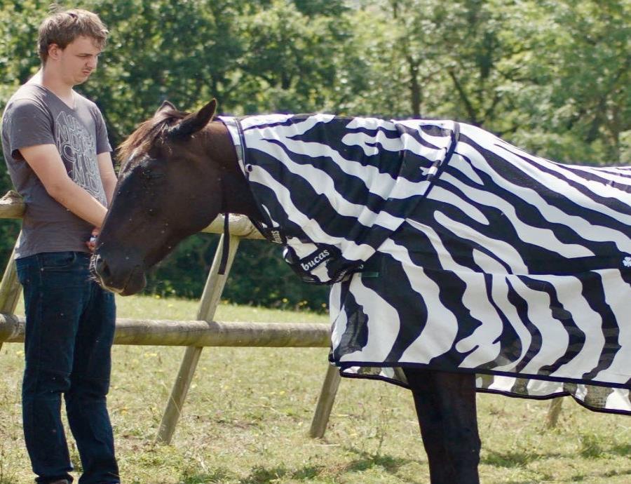 caballo cubierto con abrigo de rayas de cebra