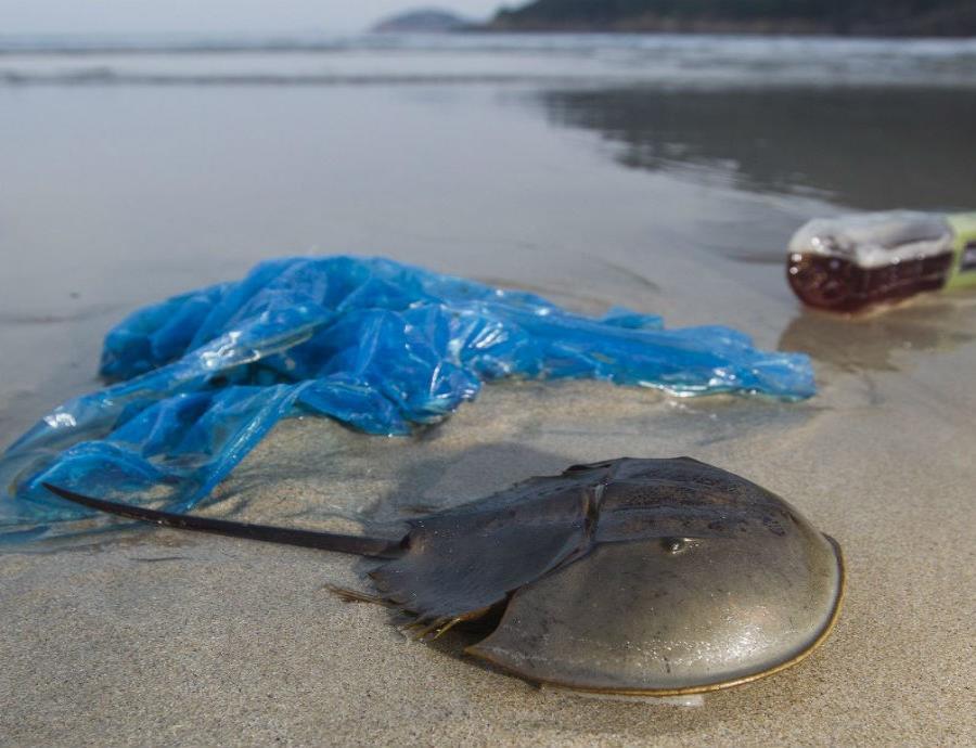 toneladas de plastico en el mar