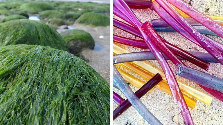 Straws Made of Seaweed Could Replace Their Plastic Nemesis