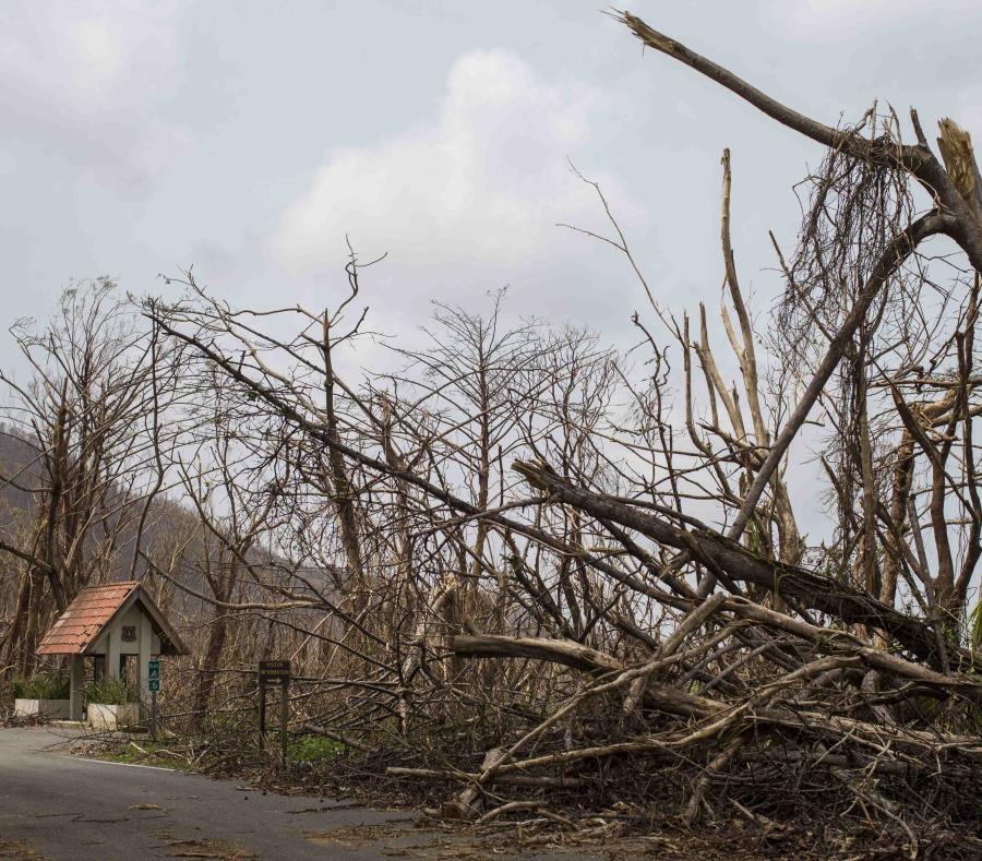 bosque nacional El Yunque huracan Maria