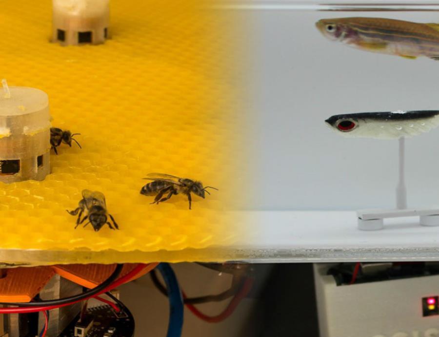 experimento con abejas y peces mediante el uso de robots