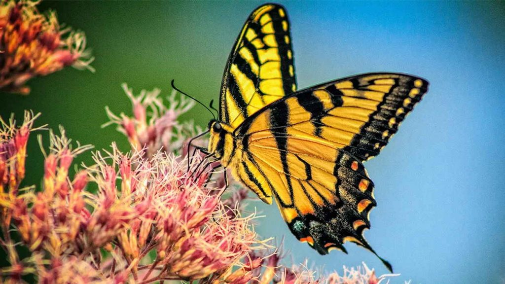 Insects butterfly