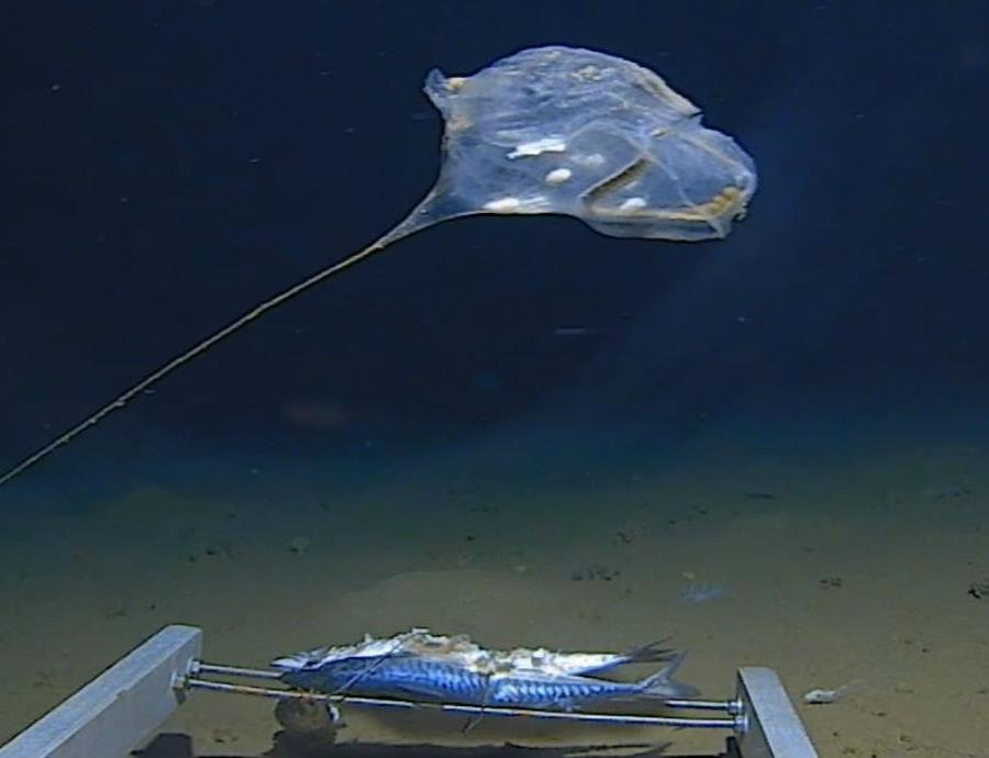 bolsa de plastico fondo del mar