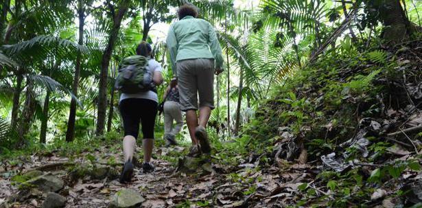 centro investigacion bosque Toro Negro Orocovis