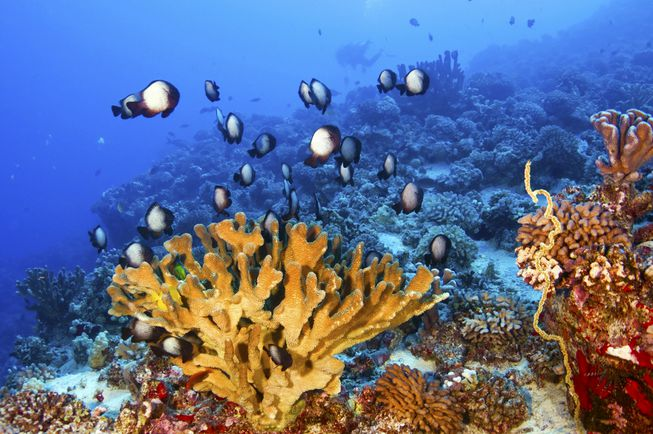hawaii-coral-super-reefs-with-fish