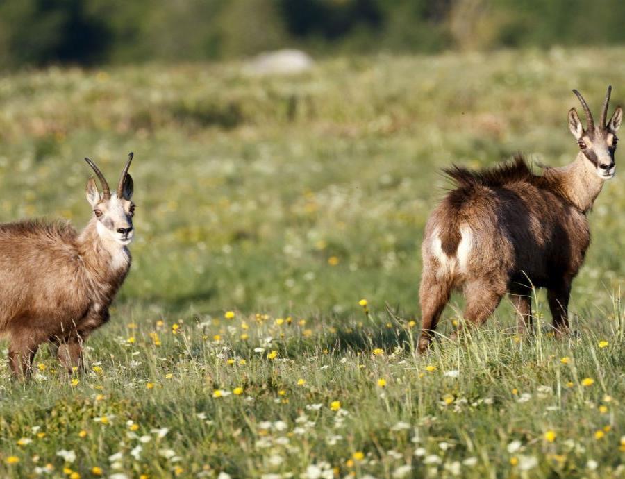 mamiferos herbivoros