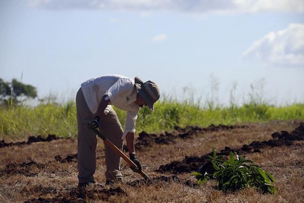 mantenimiento-de-siembra-hle-min