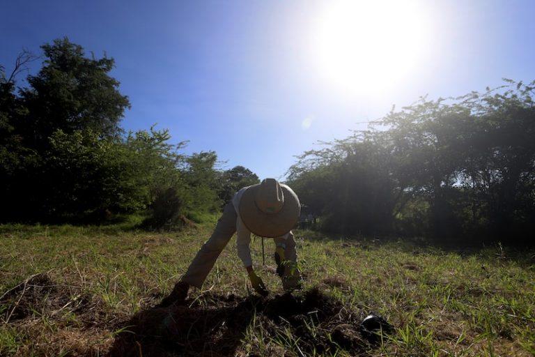 Mantenimiento de siembra