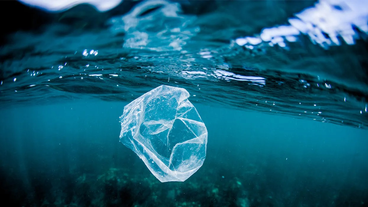 Para la Naturaleza | Plastic Pollution Harms Ocean Bacteria
