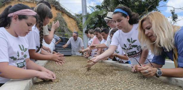 proyecto germinacion de la semilla del cafe