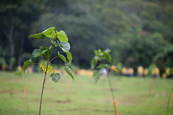 siembra-de-arboles-nativos