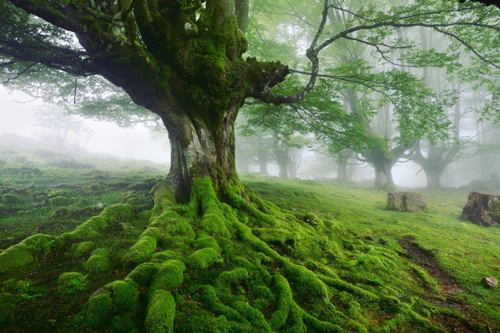 trees save lakes