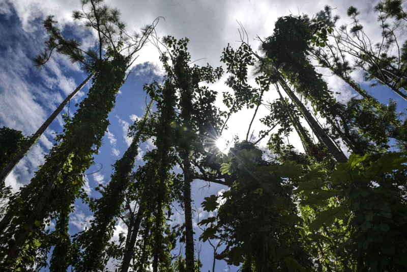 arboles bosque ambientales