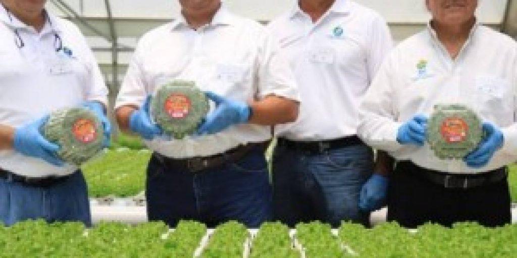 empleos agricolas en Ciales
