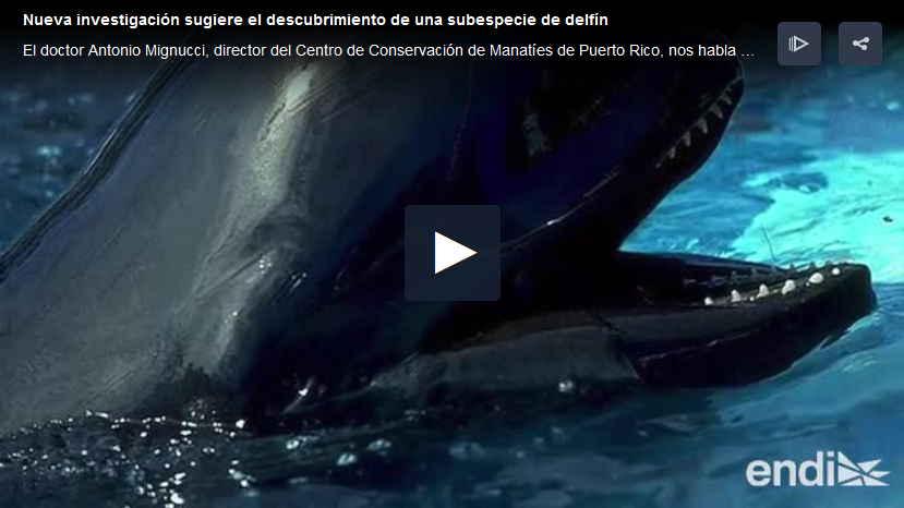 subespecie delfin